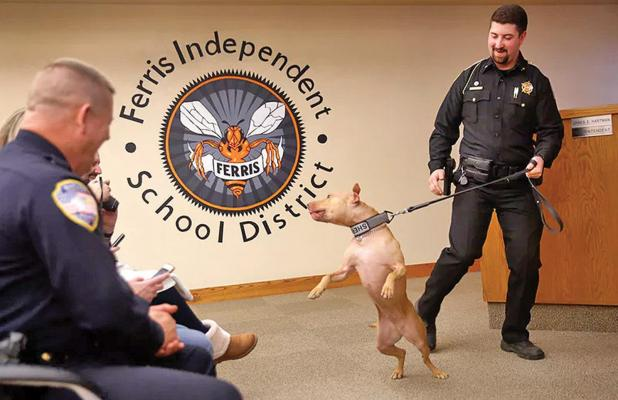 Franklin County (Ark.) sheriff's Deputy Brandon Chancey tries to control his new and excited K9 Pit Bull, Pepper, as they're introduced during Friday's graduation from Midlothian-based Sector K9, a police canine training group, at Ferris ISD auditorium. Photo courtesy Tom Fox / The Dallas Morning News