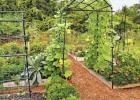 Incorporate trellises into garden plans so beans, peas, tomatoes and even squash can be trained to grow vertically. Photo courtesy of Gardener's Supply Company.