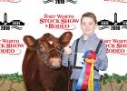Italy FFA student Gared Wood captured Champion Late Spring Heifer Calf with Gare'd Miss Prissin. Photography by Barron Photografix.